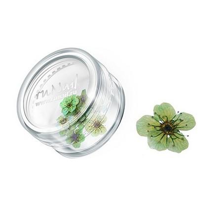 ruNail, дизайн для ногтей: сухоцветы 0463 (зеленый)